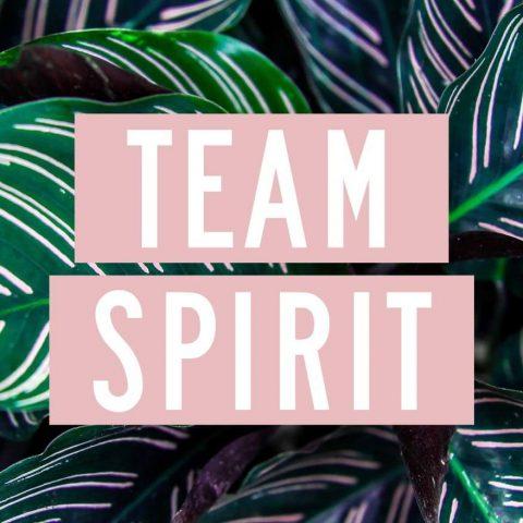 BrandGarden by Mit-Schmidt kreativ mutig team spirit marketing pr design